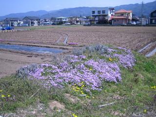 上社付近の畑 花が綺麗でした