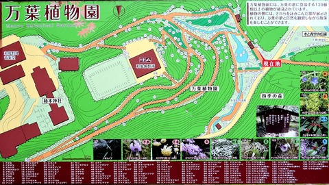 島根県立万葉公園 万葉植物園 全図 益田市