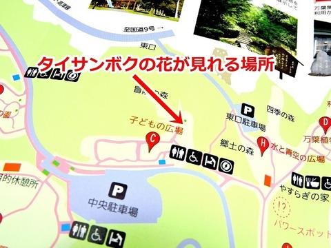 島根県立万葉公園  パンフレット「子どもの広場」タイサンボク