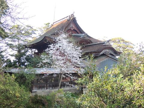 益田市 柿本神社 本殿 桜2014