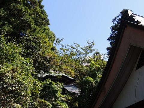 益田市 住吉神社の拝殿屋根の奥の本殿(一部)