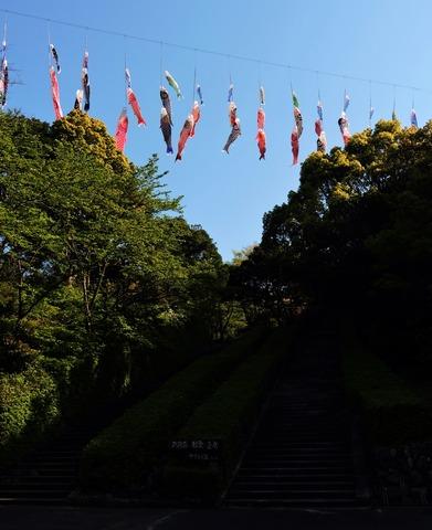 益田市 島根県立万葉公園東口 こいのぼり