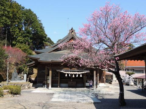 高津柿本神社と梅の花2014年3月11日
