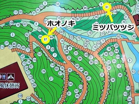益田市 万葉植物園 朴の木と三葉躑躅の場所