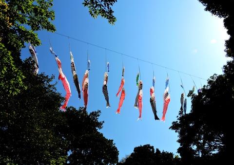 島根県立万葉公園の「進撃のこいのぼり」の風景(益田市高津)1