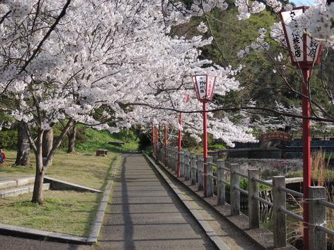 益田市 七尾公園 桜と朱塗りの街灯