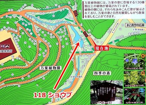 島根県立万葉公園 万葉植物園 ショウブの場所