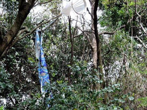 益田市万葉公園鯉のぼり