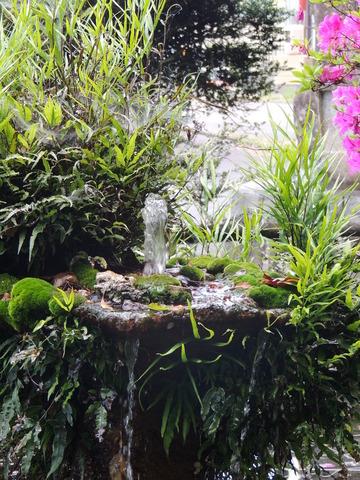 高津柿本神社 池 噴水