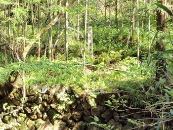 丸山銅山跡