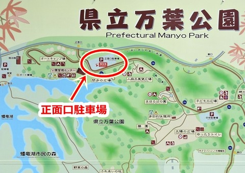 島根県立万葉公園 正面口駐車場 ヤマボウシ