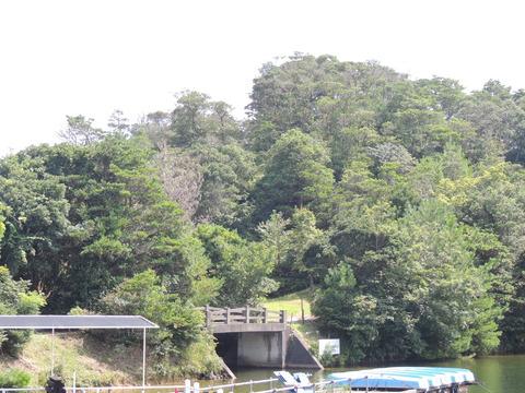 蟠竜湖 広葉樹が主の雑木林