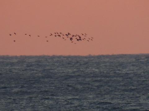 益田市沖の海鳥の群れ