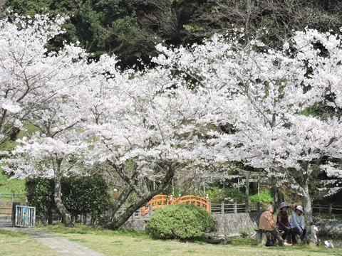 益田市水源地 桜20150402
