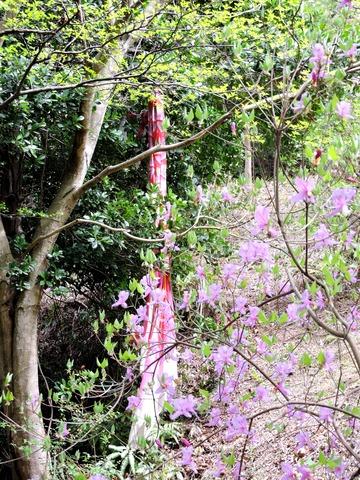 益田市万葉公園鯉のぼり2
