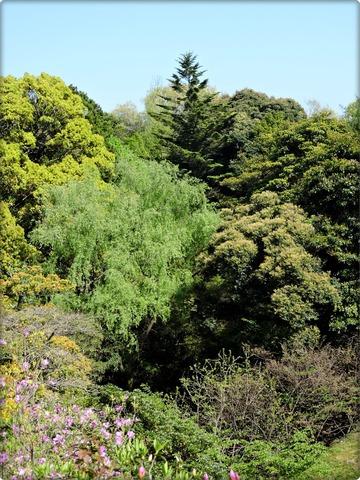 万葉植物園を四季のもりからの樅の風景