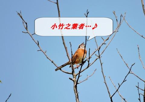鳥詠む 小竹之葉者