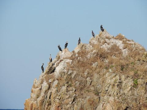 益田市の観音岩と7羽の鵜の風景