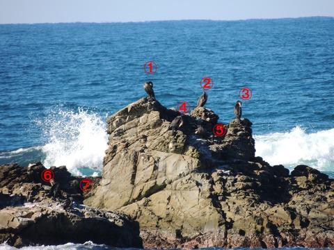 益田市の7羽の鵜の風景