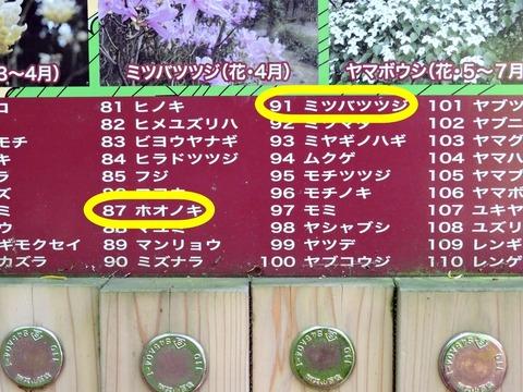 島根県立万葉公園 万葉植物園 朴の木と三葉ツツジのナンバー