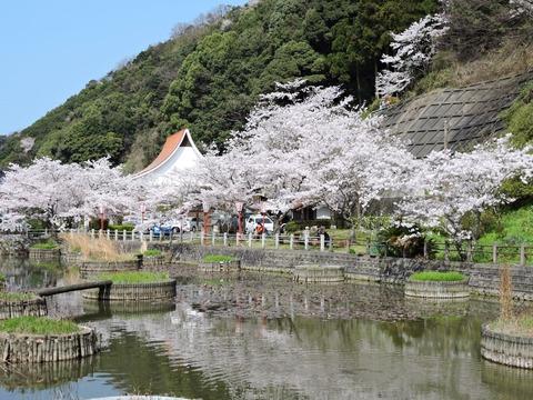 益田市七尾公園 桜並木20150402