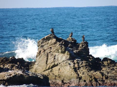 益田市 風景 持石海岸と7羽の鵜