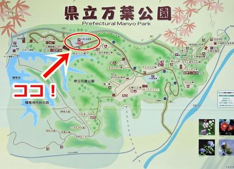 島根県立万葉公園 ヤマボウシの花が見れる場所