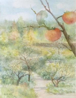 229柿の実-1