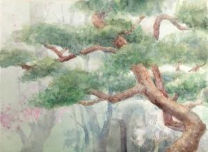 262千年の老木−1
