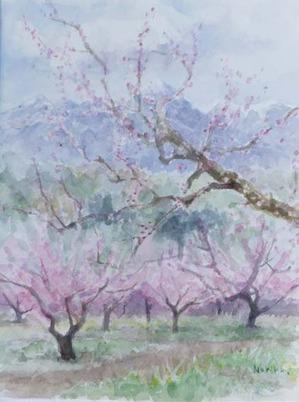 240桃の花-1