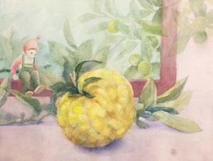 255大柚子1、