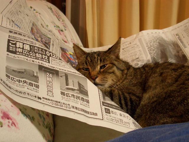 新聞紙とそーや