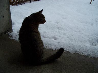 雪とそーや