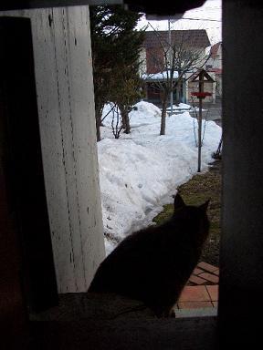 猫ドアから