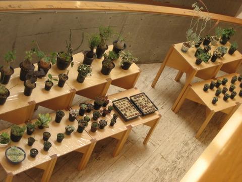 世界のサボテン・多肉植物展