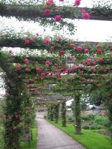 薔薇のパーゴラ