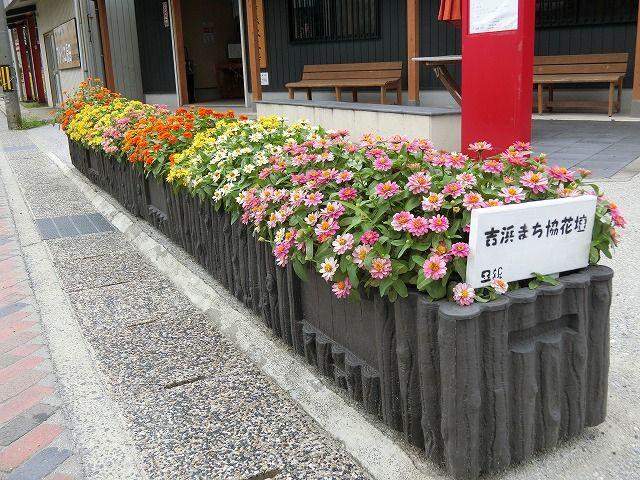 環境グループ『里親花壇の今』を紹介します。の画像