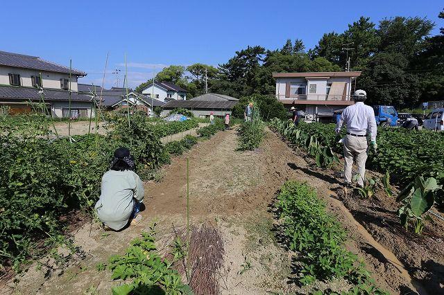 食育事業の活動を紹介します。の画像