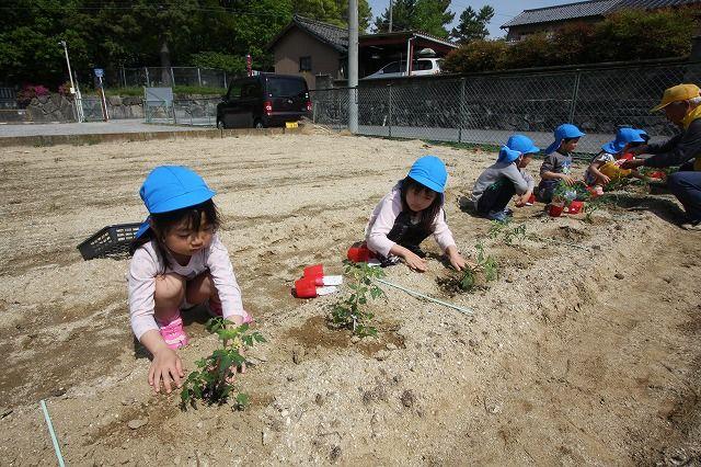 なかよし農園にて「夏野菜の苗を植えました」その他の作業紹介します。の画像