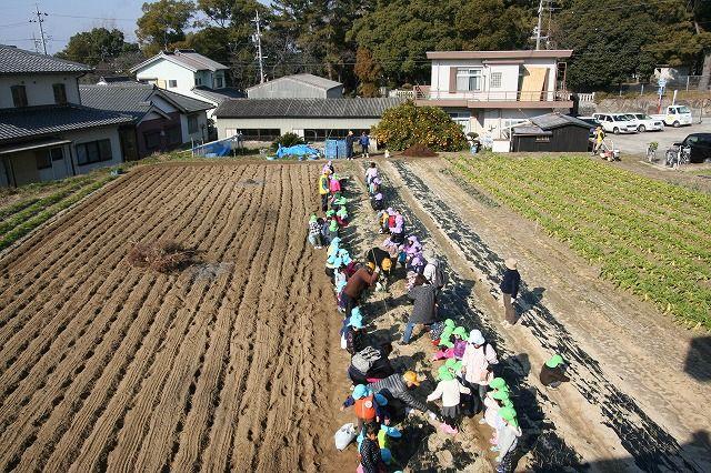 吉浜幼稚園『なかよし農園でタマネギの苗植えました』の画像
