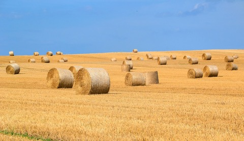 Hay-Straw-Bales-Hay-Bales-Harvest-Straw-1930612
