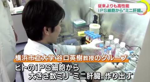 【朗報】ips細胞で人間の肝臓と同じレベルの肝臓を作り出す事に成功!