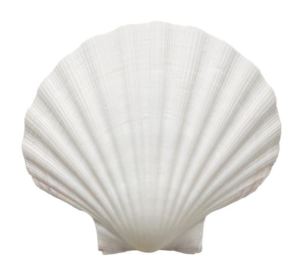 【画像】Hカップボインの人気グラドル鈴木ふみ奈が貝殻ビキニの限界に挑戦した結果・・・