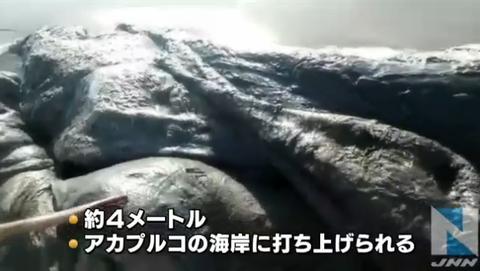 メキシコの海岸に未知なる生物!? およそ4メートルの物体には無数の穴 2ch「タコじゃね」