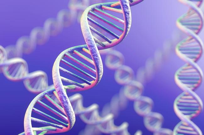 """理想の体型への近道!?""""遺伝子型ダイエット""""に注目_179065129"""