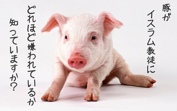 東京入管横浜支局がイスラム教で禁じられている豚肉を提供しイスラム教徒にキレられるwww