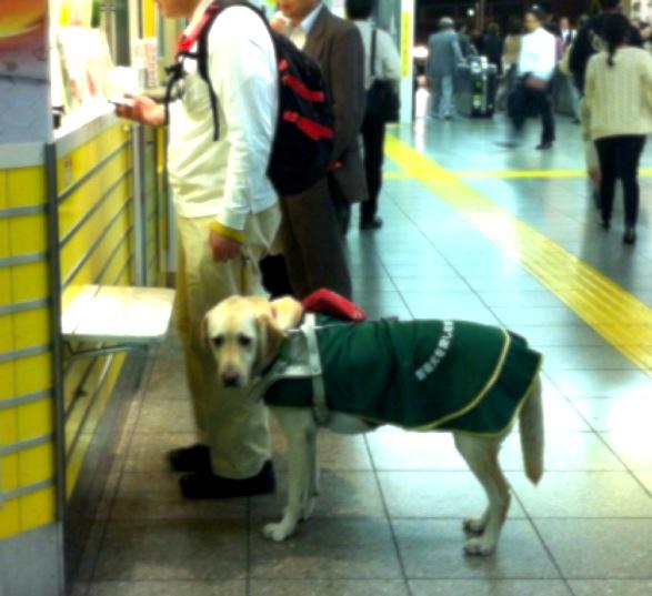 東京メトロ銀座線で品田直人さんが亡くなった事故、ホームの狭さじゃなく盲導犬が原因の可能性を調べる警察