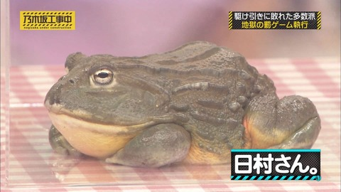 【乃木坂46】乃木中に出演したカエルの「日村さん」以前に西野七瀬と共演していたwww