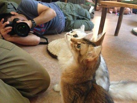 猫カフェをもう一歩進化させるスレ
