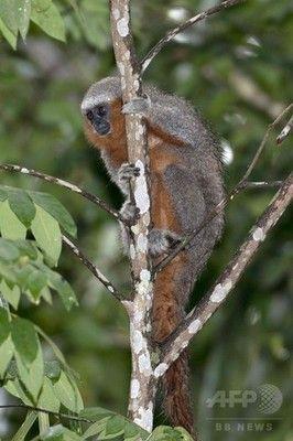 【生き物】アマゾン熱帯雨林で新種400種近く発見←これ